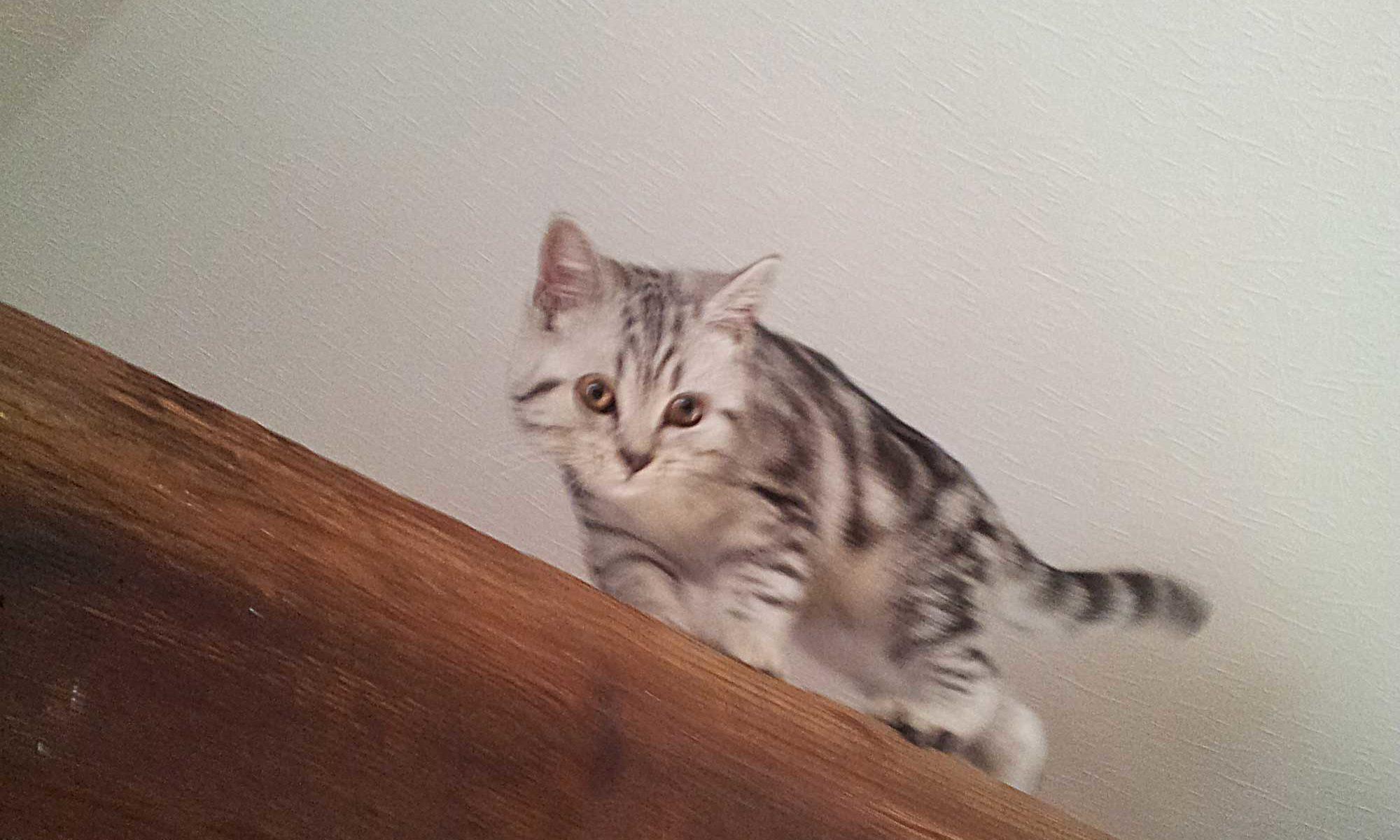 Lizzi auf dem Balken